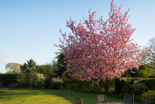 Easy  Garden Makeover Tips To Add Value To Your Home