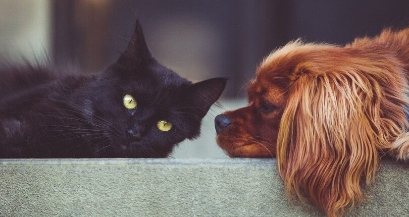 Advice For Local Landlords On Tenants With Pets
