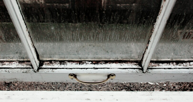 What Local Landlords Can Learn From The Mouldy Nation Report